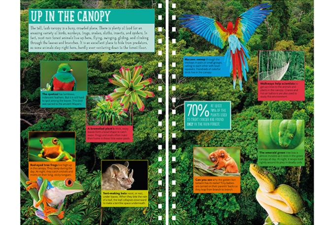 Jungle Explorer's Survival Guide